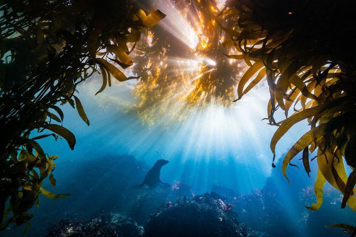 landschaft mit vielen pflanzen unterwasserbilder