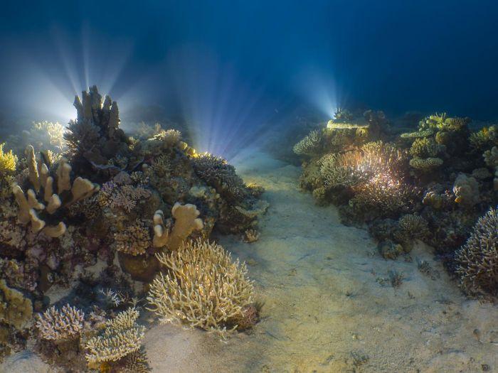 meeresboden mit lichtern - unterwasserbilder