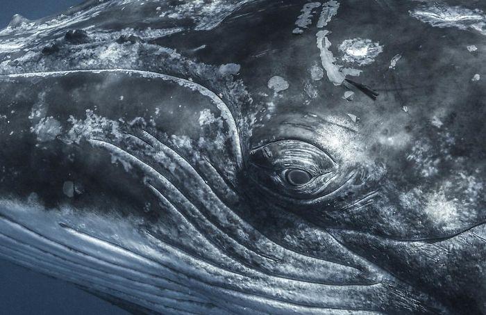 schwarz-graues design unterwasserbilder