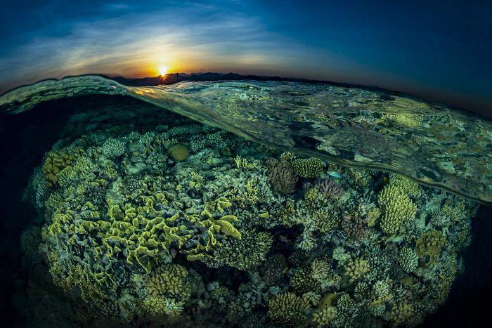 steine und grüne unterwasserbilder