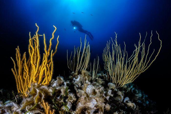 steine und gras unterwasserbilder