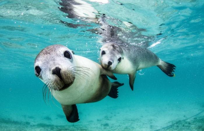 unterwasserbilder charmante säugetirere