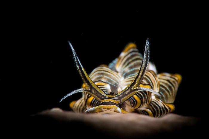 unterwasserbilder eine gelbscharze schnecke
