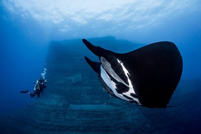 unterwasserbilder fisch in schwarz und weiß
