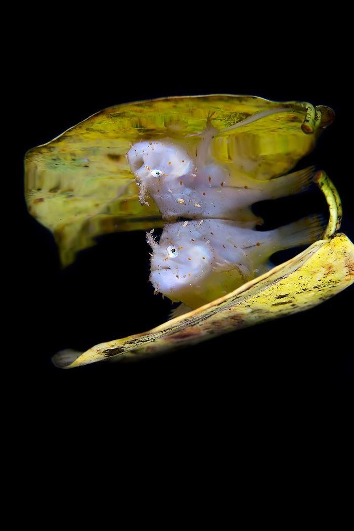 unterwasserbilder goldene tierchen