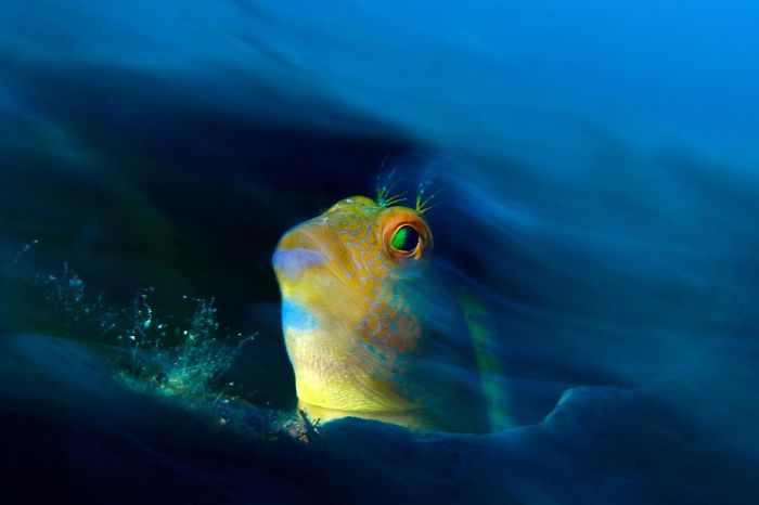 unterwasserbilder goldener fisch im wasser