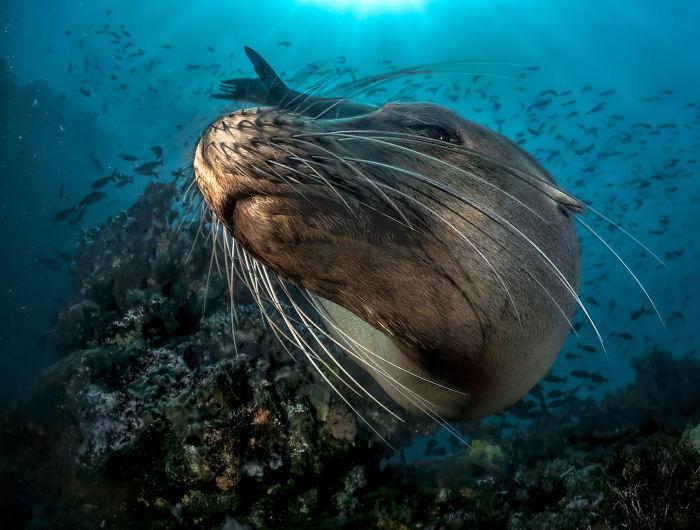 unterwasserbilder hinreißende tierwelt