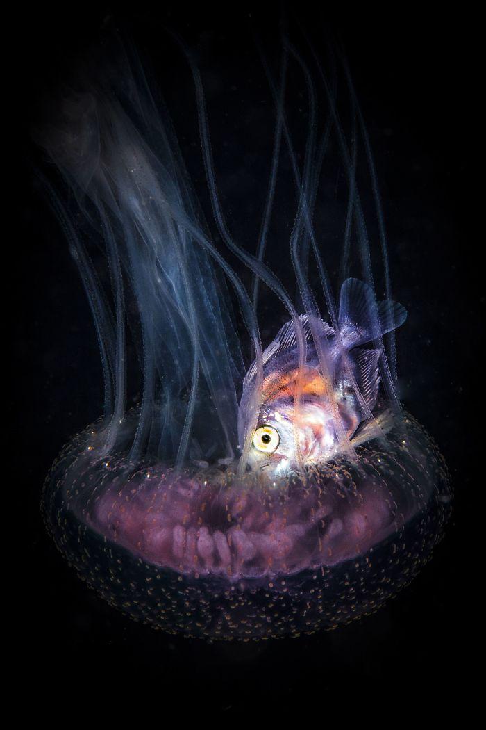 unterwasserbilder lila und schwarz - farben