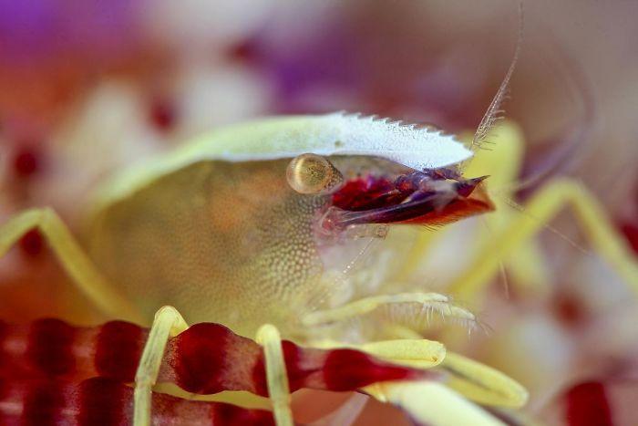 unterwasserbilder mit gelben krebsen