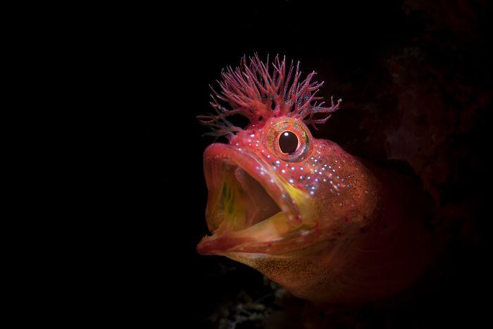 unterwasserbilder sehr interessanter fisch