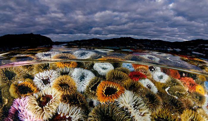 unterwasserbilder sehr viele tolle pflanzen