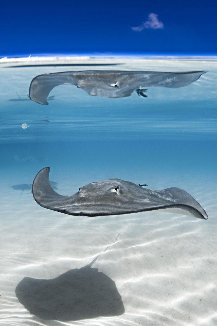 unterwasserbilder spiel mit schatten und licht