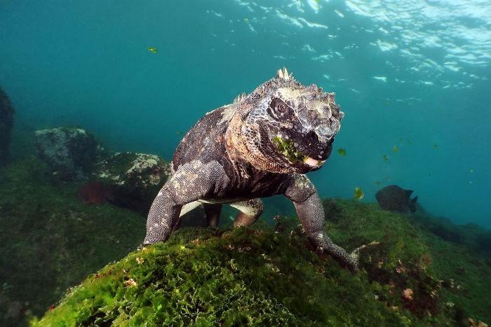unterwasserbilder tolle tiere am boden