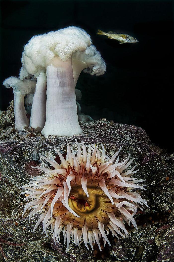 unterwasserbilder tolle weißen pilze