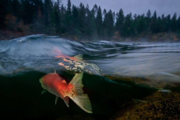 unterwasserbilder wald und tolle fische