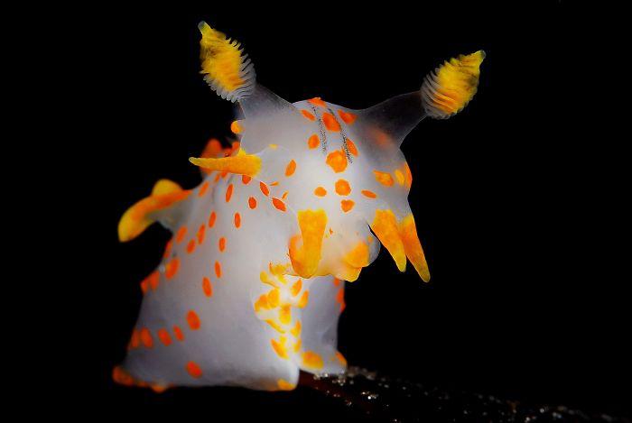 unterwasserbilder weiß gelbe gestalt