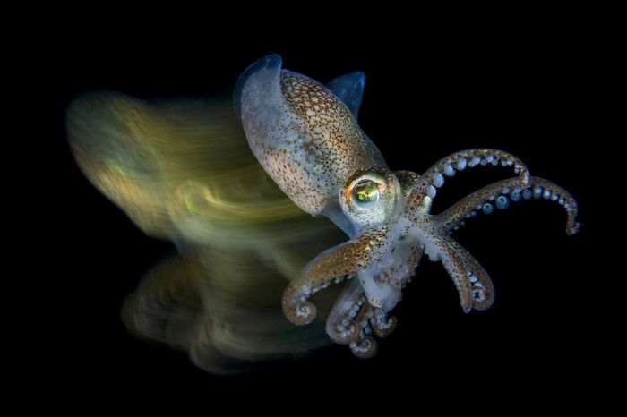 weiße weichtiere unterwasserbilder