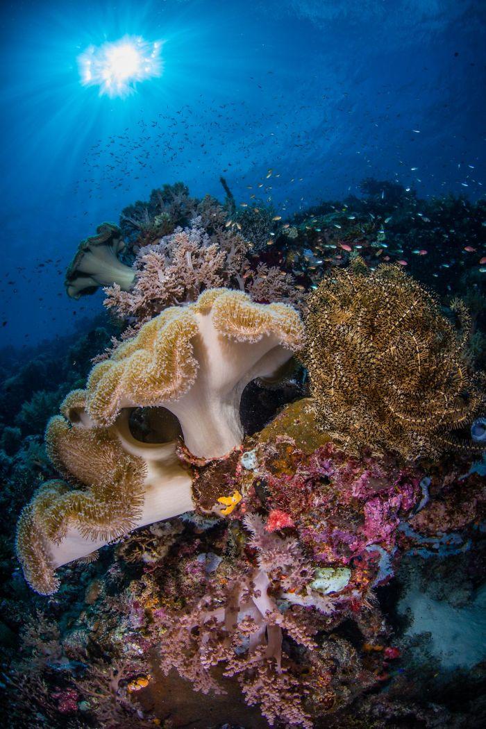 wunderbare unterwasser pflenzen unterwasserbilder