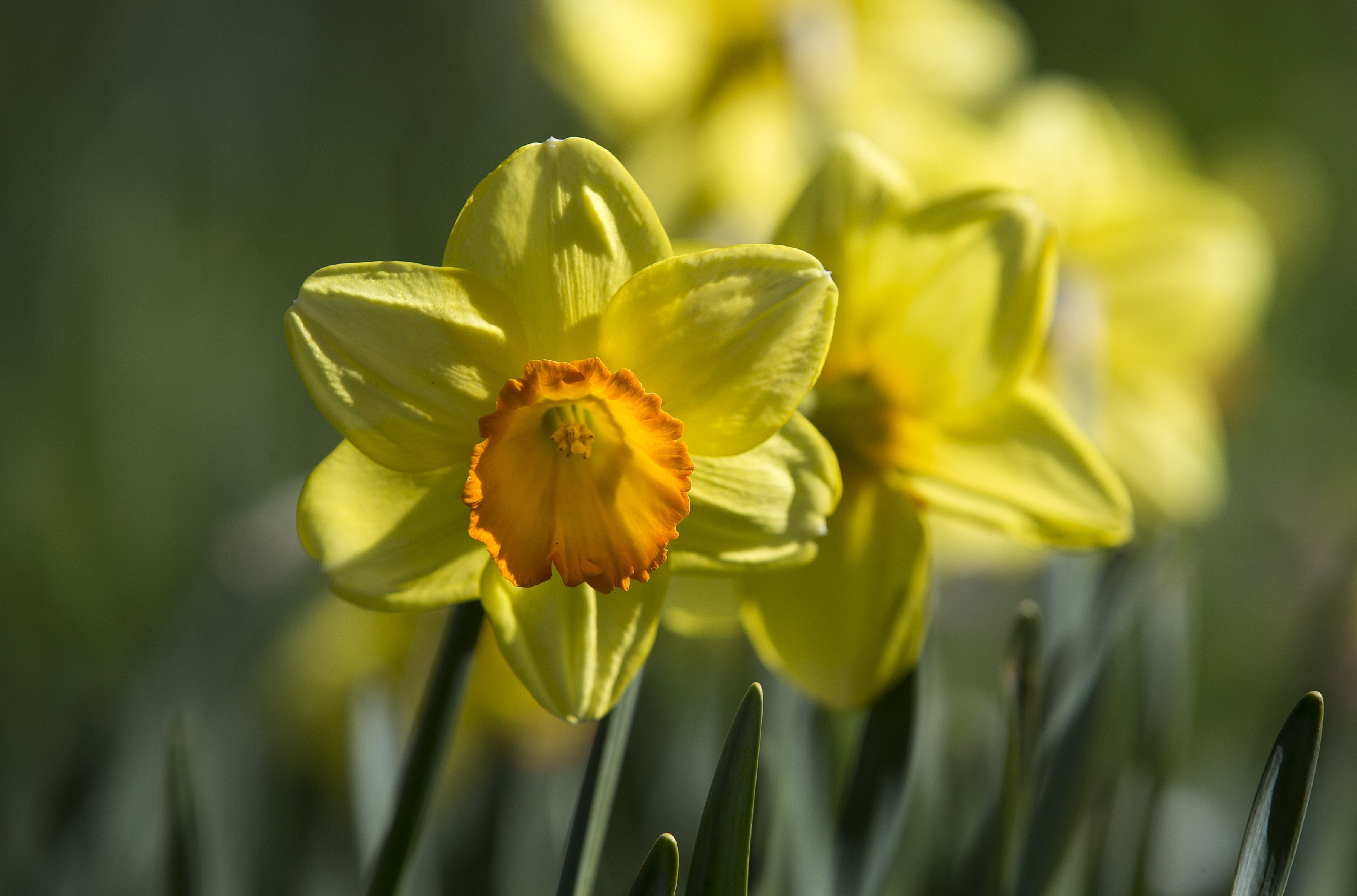 Blüten in tollem Gelb Gartenpflege