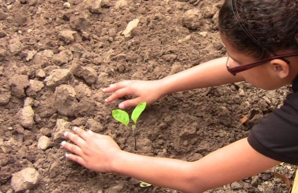 Einsetzen von Pflanzen Gartenpflege