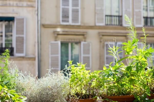 Gartenpflege Blumentöpfe vor dem Gebäude