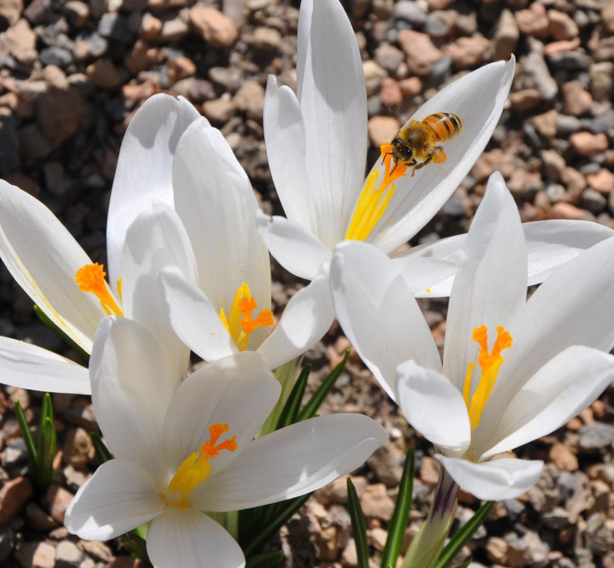 Gartenpflege Pflanzen in Weiß und Gelb