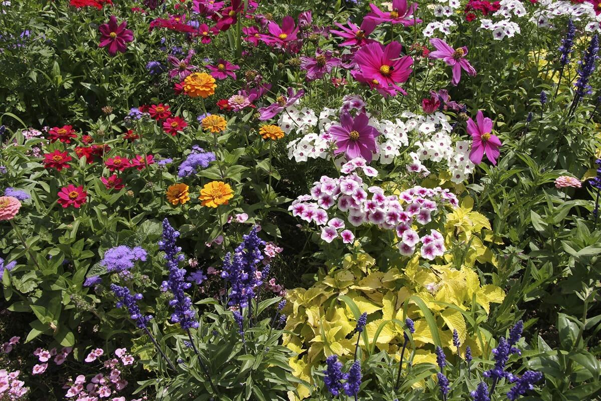 Gartenpflege blumen für den Sommer
