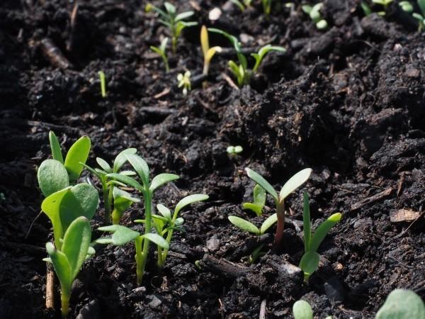 Gartenpflege erste grünen Pflanzen