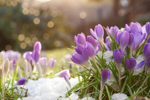 Gartenpflege schnee und blumen