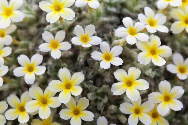 Gartenpflege wunderschöne tolle Blumen