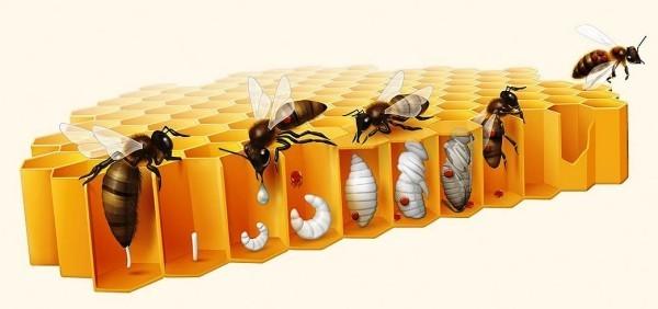 Hi-Tech Bienenstock CoCoon von BeeLife schützt Honigbienen vor Varroamilben verroa milben haften sich noch an den babys fest