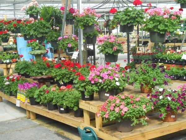 Holzgestell - tolle Gartenpflege