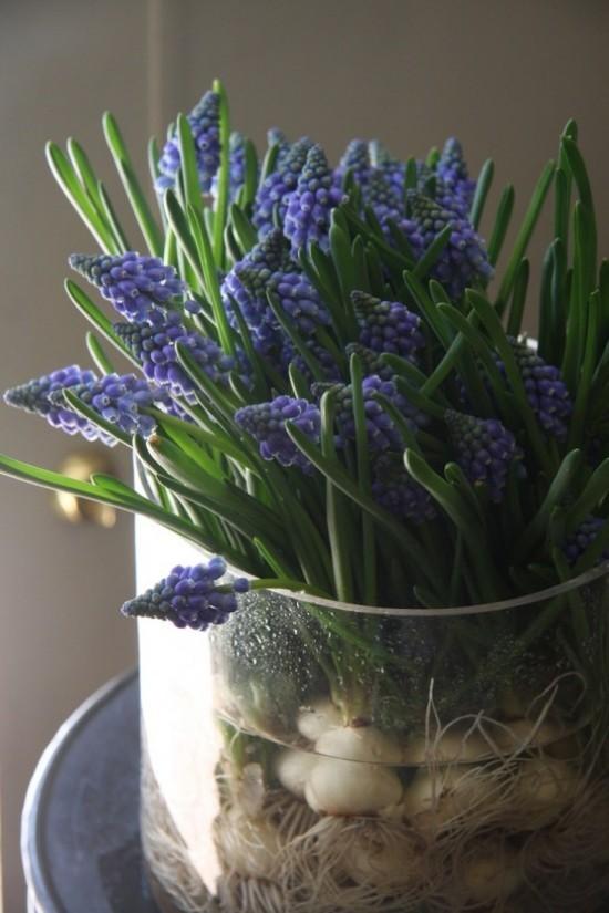 hyazinthen bringen tolle farben und fischen fr hlingsduft. Black Bedroom Furniture Sets. Home Design Ideas