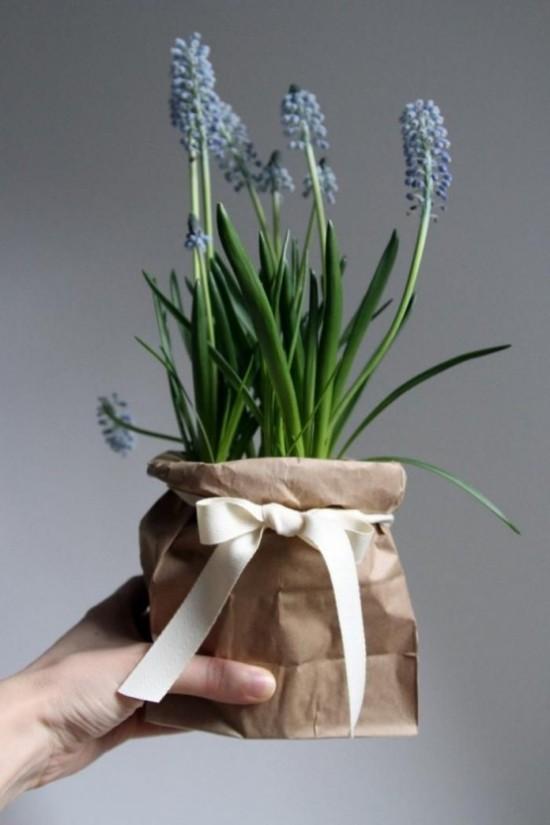 Hyazinthen im Topf als Geschenkidee zum Frühlingsbeginn