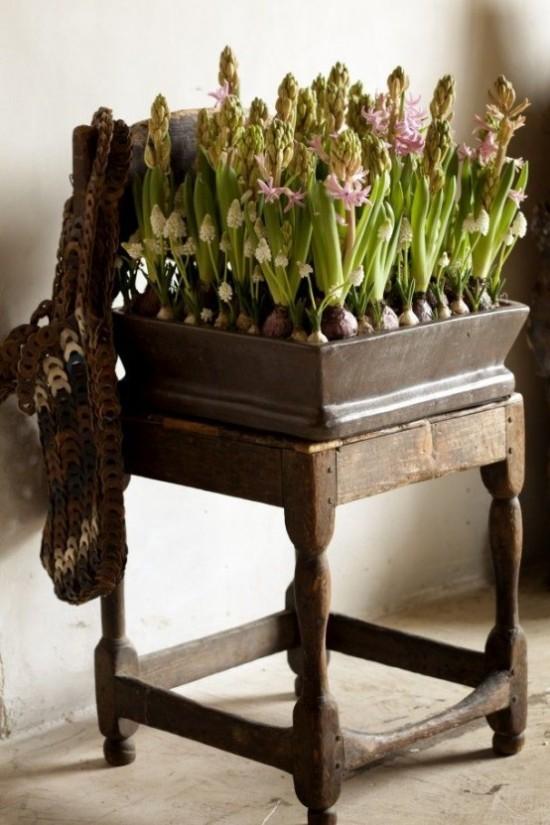 Hyazinthen im alten Blumenkasten rustikaler Look