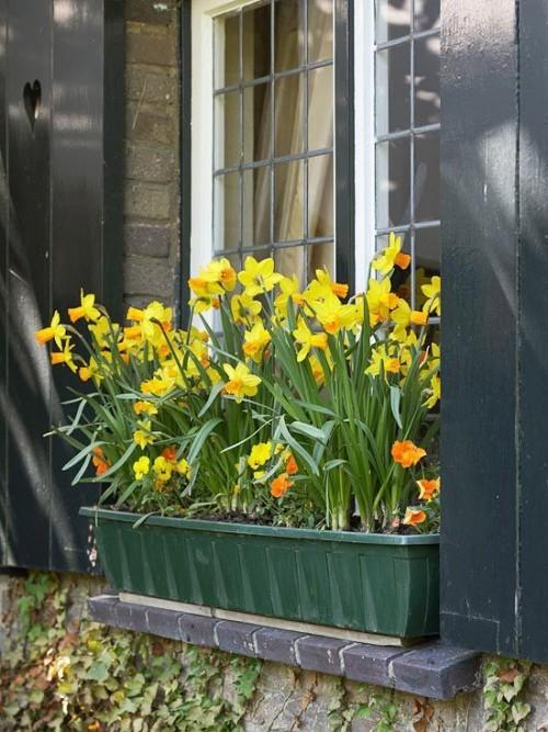 Narzissen Deko Ideen draußen im Blumenkasten am Fenster