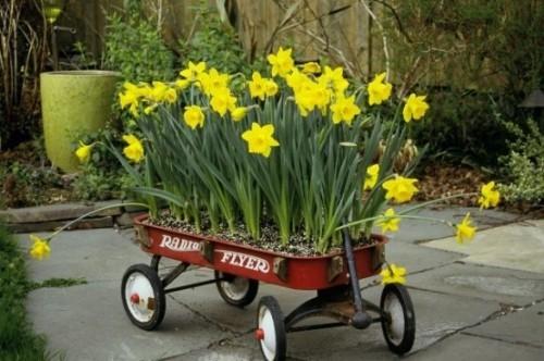Narzissen Deko Ideen draußen im Gartenwagen auf Rädern