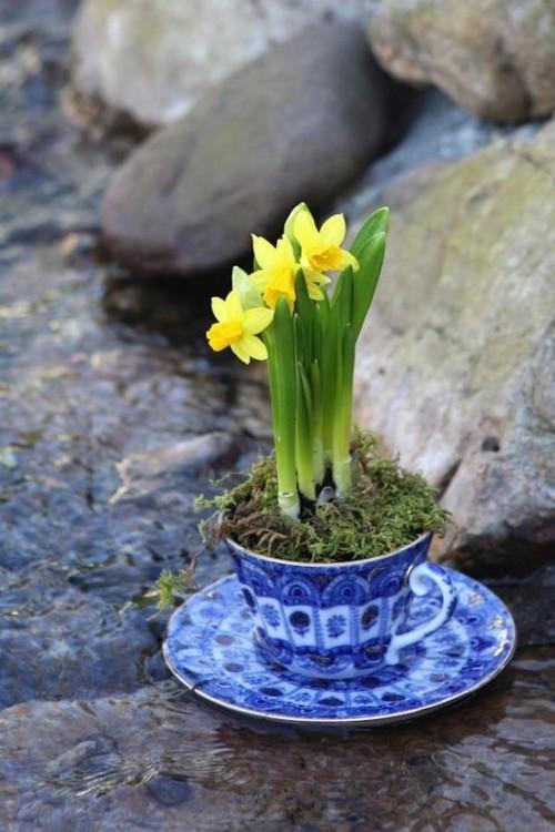 Narzissen Deko Ideen im Feng-Shui Stil in einer Tasse