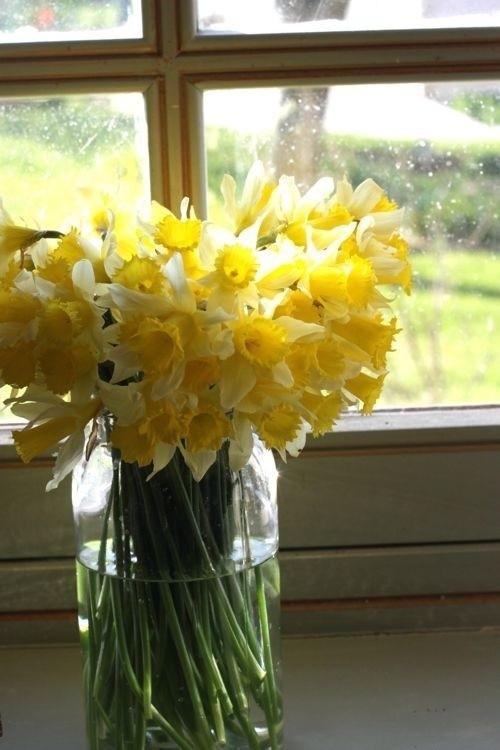 Narzissen Deko Ideen in Glas am Fenster