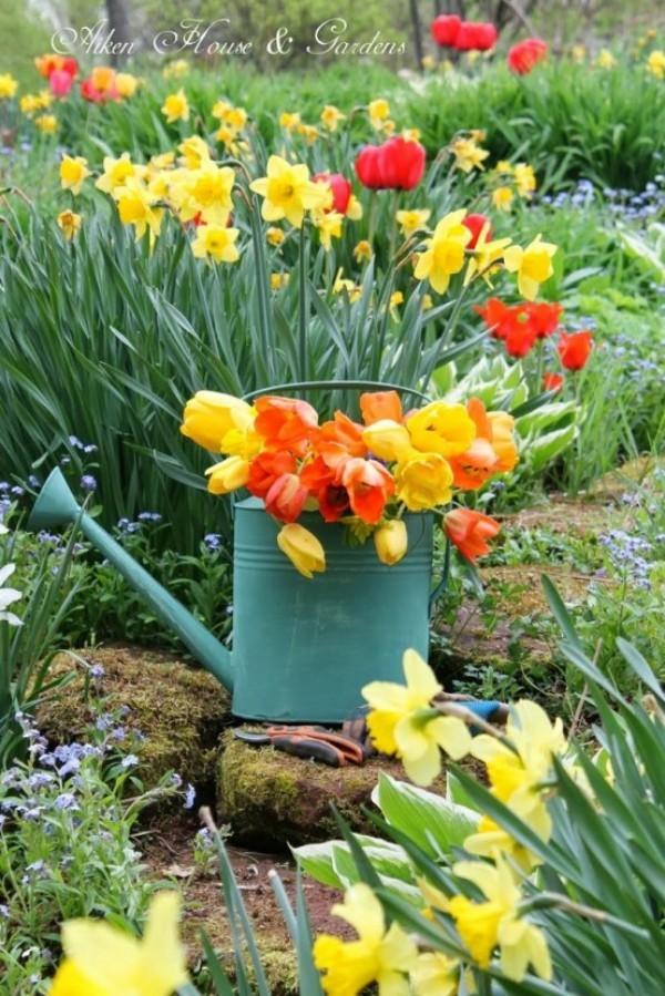 Tulpen im Garten Narzissen bunt Gießkanne