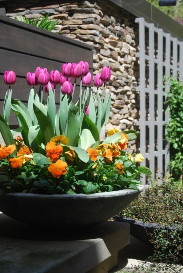 Tulpen im Garten in schüsselartigem Topf echte Hingucker draußen