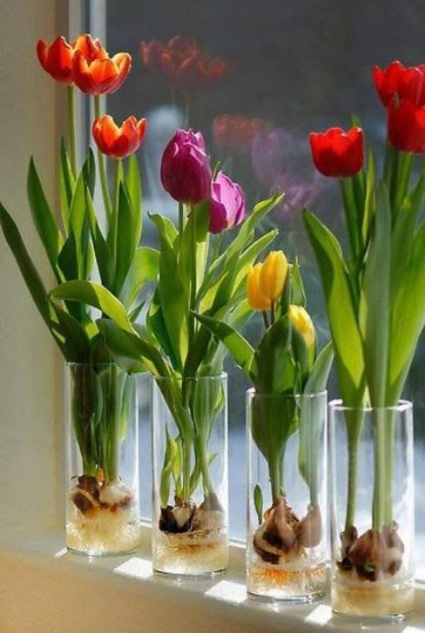 Tulpen im Interieur am sonnigen Fenster in Gläsern
