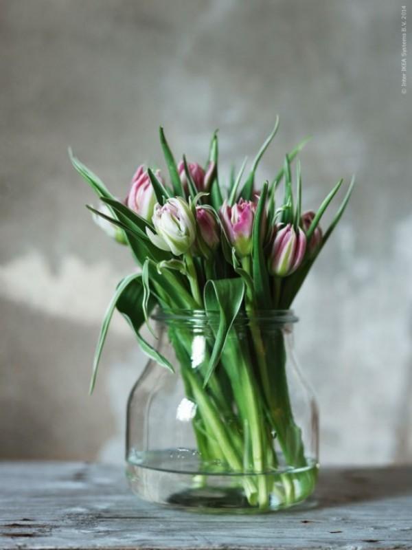 Tulpen im Interieur frisch gepflückte weiß-rosa Blüten im Glas