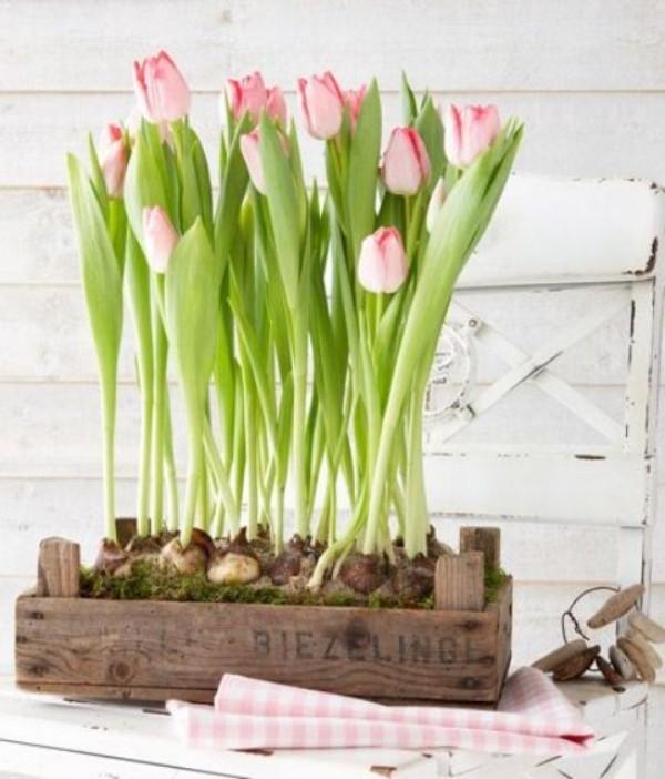 Tulpen im Interieur in zartem Rosa in Holzkiste