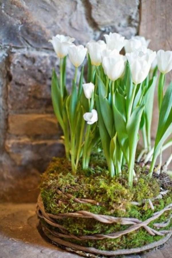 Tulpen im Interieur interessantes Arrangement im Moos