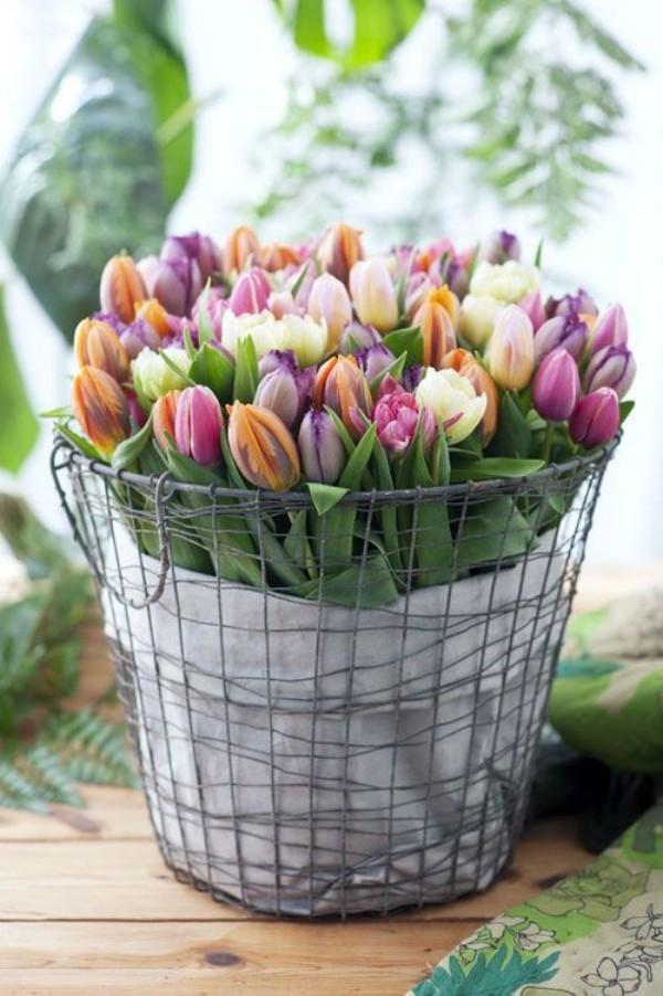 Tulpen im Interieur mehrfarbige Blüten im Metallnetzt