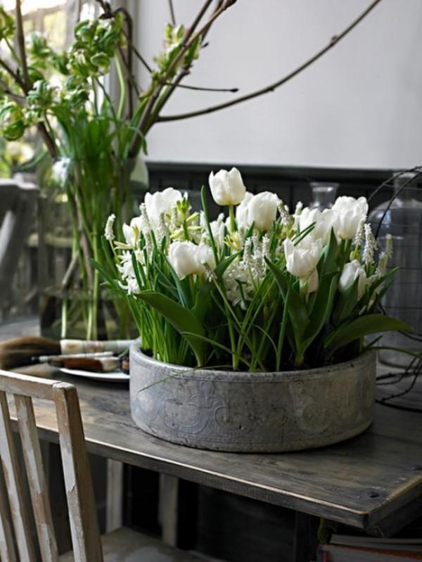 Tulpen im Interieur weiße Blüten in Metallbehälter