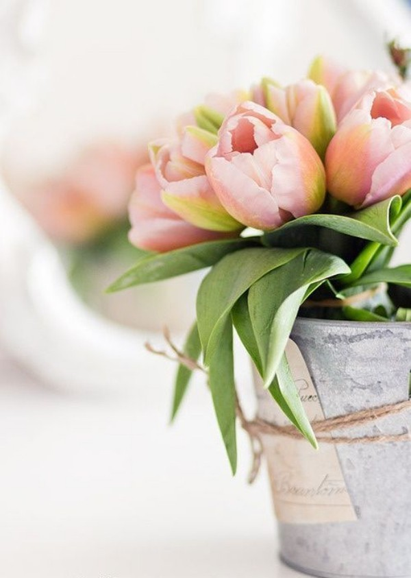 Tulpen im Interieur zarte hellrosa Blüten im alten Eimer