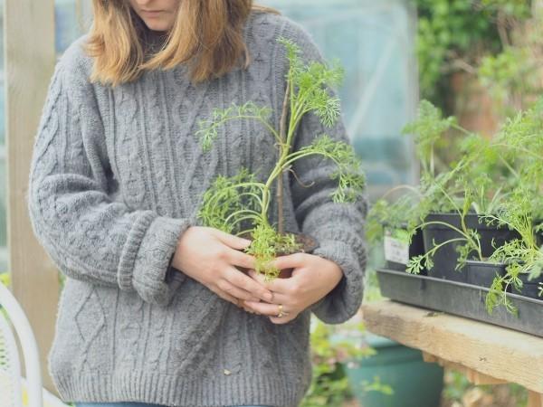 Verschiedene Pflanzen einsetzen Gartenpflege