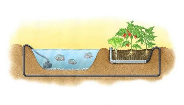 aquaponik idee gartenteich